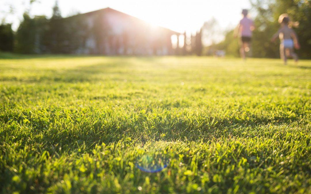 TruGreen vs Lawn Doctor