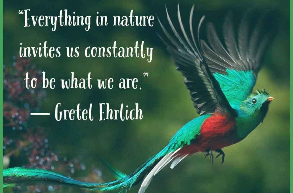 Earth911 Inspiration: Invitation To Be What We Are