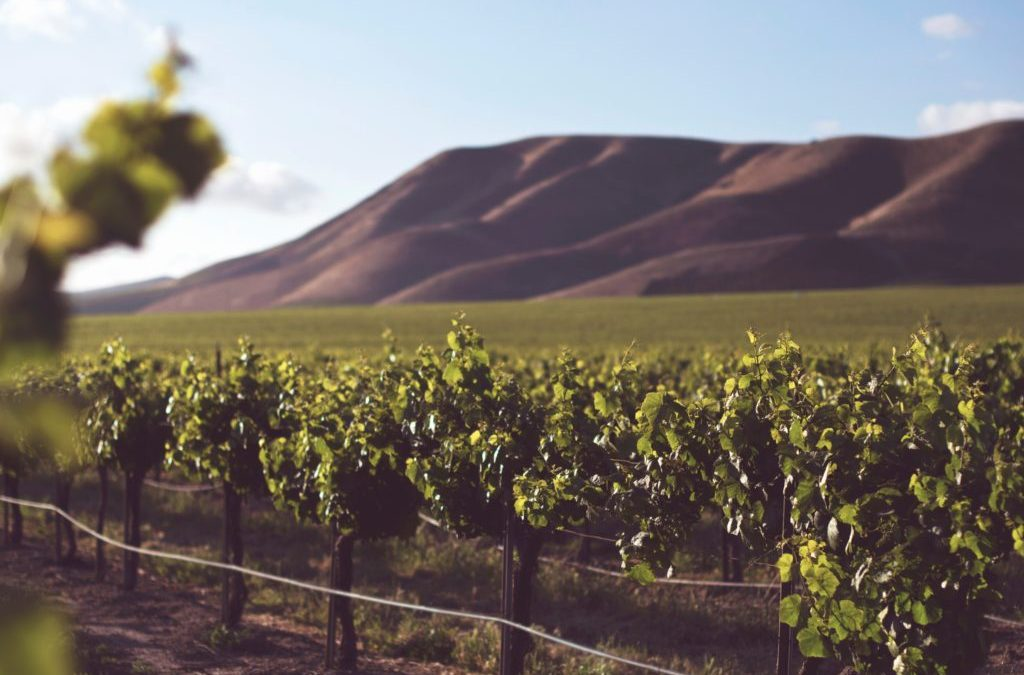 Healthy Wines: What the Labels Really Mean
